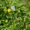 Butterflies inspiring advances in solar